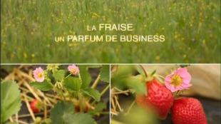 la-fraise-un-parfum-de-business